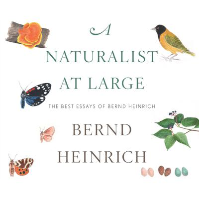 A Naturalist at Large by Bernd Heinrich audiobook